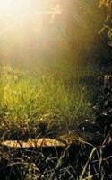 En billedkunstner tager sit kamera med ud i haven. Piller ved stort set alle de ikke-idiotsikrede knapper, der findes på sådan et apparat, og knipser løs i mikromiljøets krat og krinkelkroge. Resultat: en begavet og befriende fornyelse af det ordinære havefotografi.